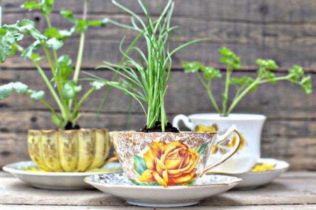Plante decorative in cani de cafea