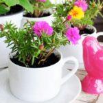 Plante mici in cani de cafea