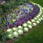 Strat de flori si plante