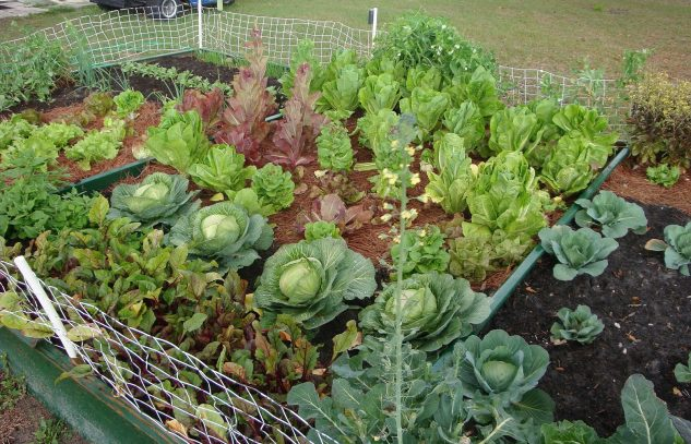 Strat de legume