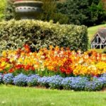Straturi de flori multicolore