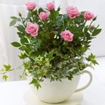 Trandafiri in cana de cafea