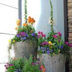 Vase de flori din ciment cu forme diferite