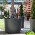 Vase mari din ciment pentru arbusti