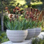 Vase mari cu flori
