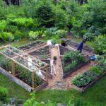 Amenajare straturi cu legume