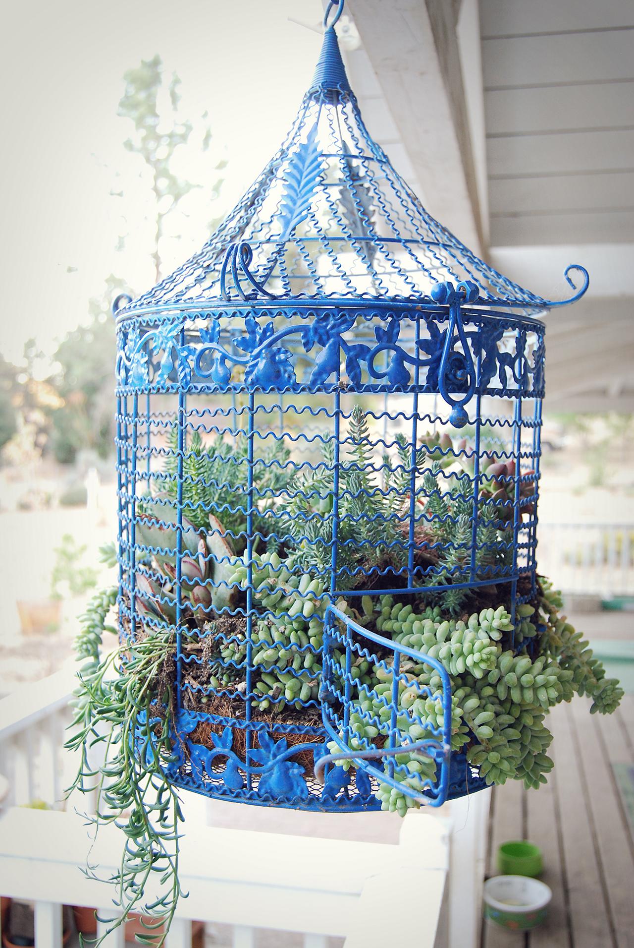 Colivie decorativa albastra
