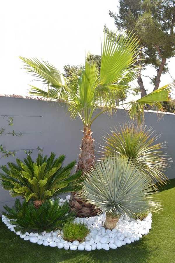 Decor arbori exotici cu pietris alb