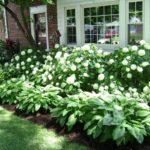 Gradina cu flori mari in fata casei