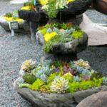 Gradina cu pietre si plante suculente