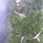 Scheleti in arbusti de Halloween