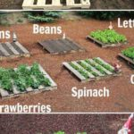 Straturi cu legume in paleti de lemn