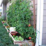Straturi cu legume langa casa