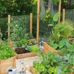 Straturi legume cu plase