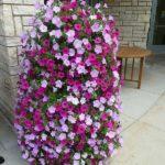 Cascada de flori agatatoare