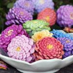 Conuri de brad vopsite colorat
