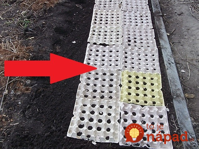 Cultivare ridichi in cartoane de oua