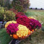 Decor de toamna cu flori