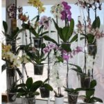 Decor fereastra cu multe flori