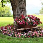 Decor flori zona umbroasa