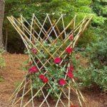 Decor gradina cu trandafiri rosii