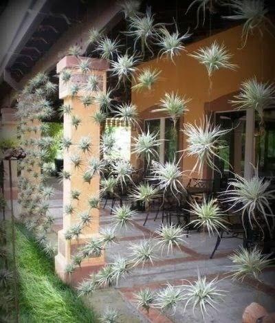 Decor terasa cu plante decorative