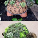 Decoratiune din plante suculente