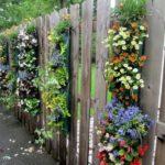 Flori agatatoare pe gard