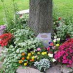 Flori care cresc in zone umbroase