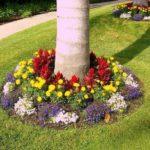 Flori colorate spatii cu umbra