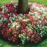 Flori multicolore zone umbroase