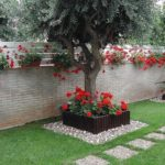 Flori rosii care cresc la umbra