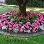 Flori roz care cresc la umbra
