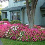 Flori specifice spatiilor umbroase