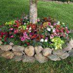 Flori specifice zonelor cu umbra