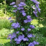 Flori violet zone umbroase
