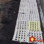 Folosire cartoane de oua in gradinarit