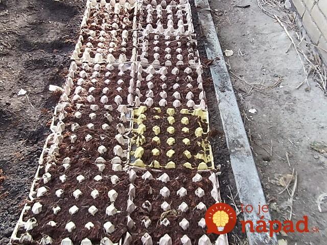 Legume plantate in cartoane de oua