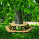 Masa in jurul copacului