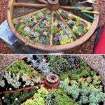 Plante suculente in roata de lemn