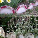 Protejare straturi cu farfurii