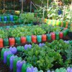 Straturi de legume din sticle de plastic