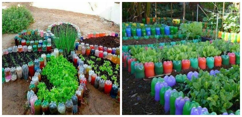Straturi de legume