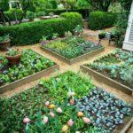 Straturi inaltate de legume si flori