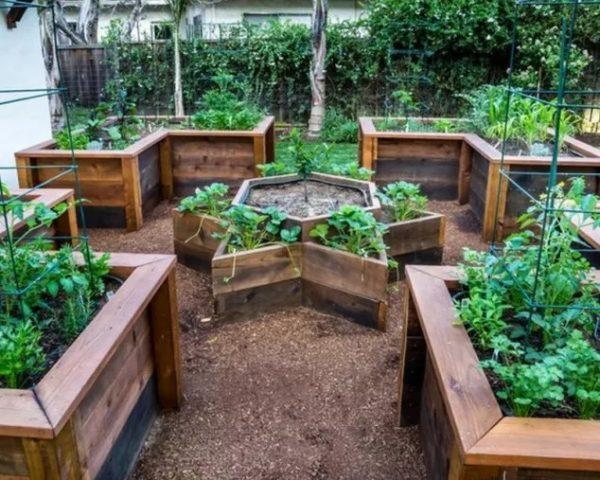 Straturi inaltate legume cu forme diverse