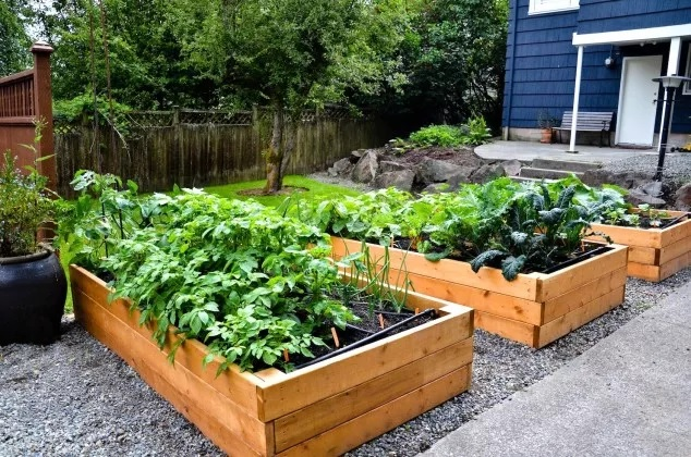 Straturi inaltate mari pentru legume