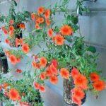 Suporturi flori rustice