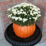 Vaza de flori din bostan