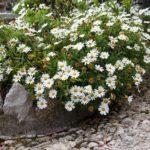 Amenajare rond de flori