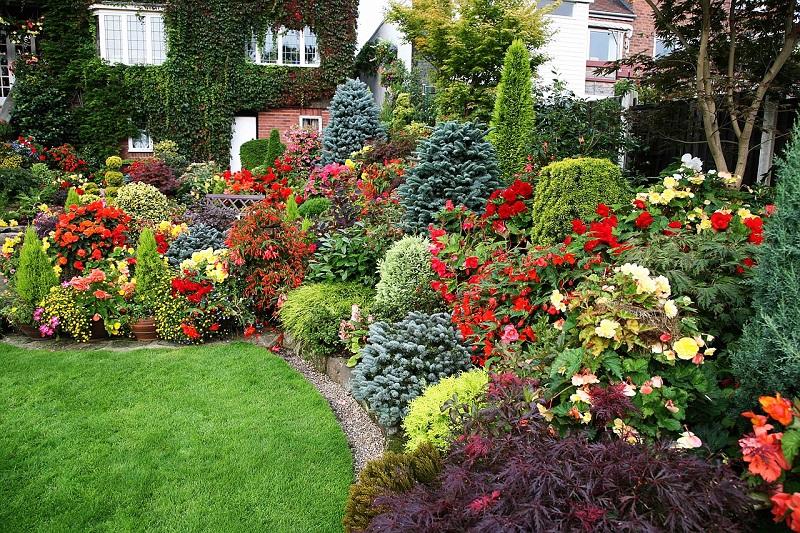 Gradina cu flori multicolore